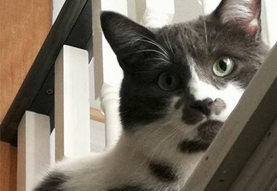 Cat Sitting Oakville
