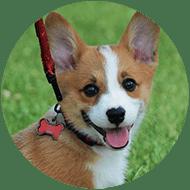 Dog Sitters Oakville, Dog Sitting Oakville