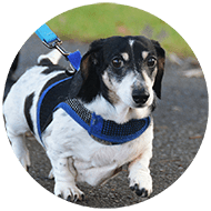 Dog Walking Oakville, Dog Walkers Oakville