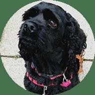 Dog Walkers Oakville Ontario